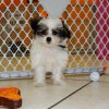 gorgeous and playful yorkie ton puppy for sale